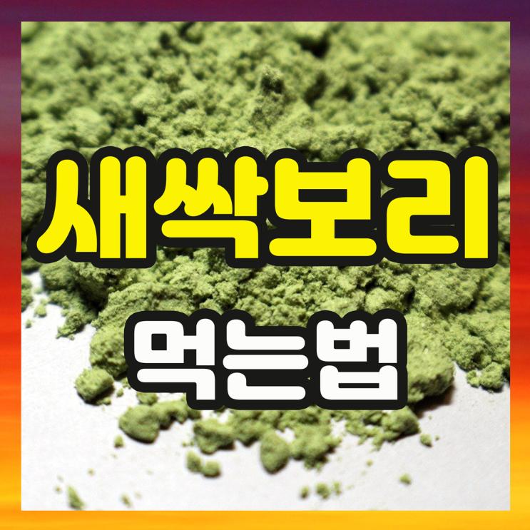 국내산 새싹보리 분말 효능과 보리새싹 먹는법 (가격)