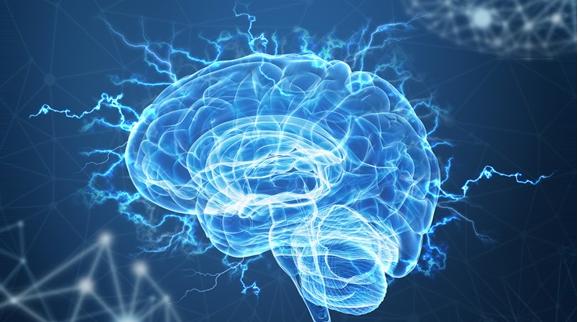 젊은 야망인의 뇌 호르몬 상태와 그들에게 도움이 되는 비밀 호르몬