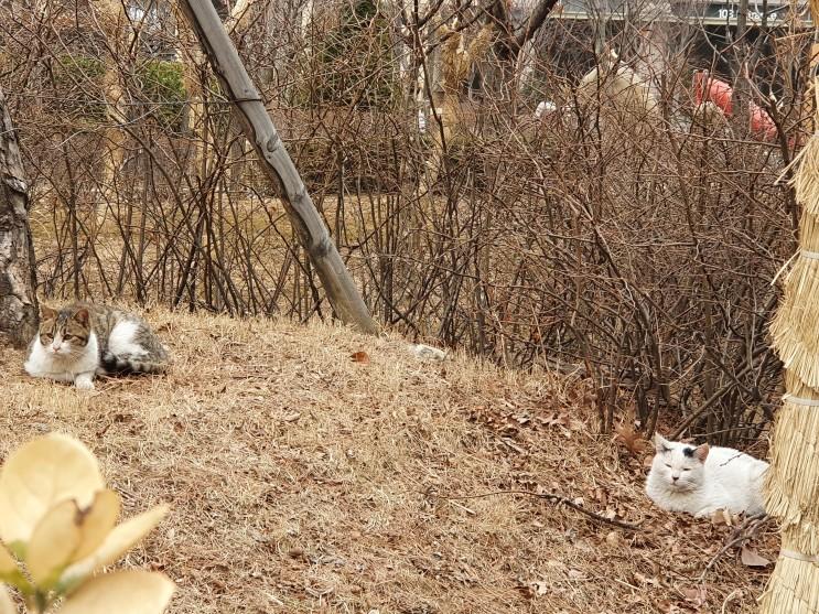 길 고양이들의 화합