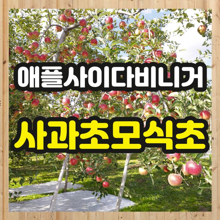 자연발효 애플사이다비니거 효능 사과초모식초 분말 부작용