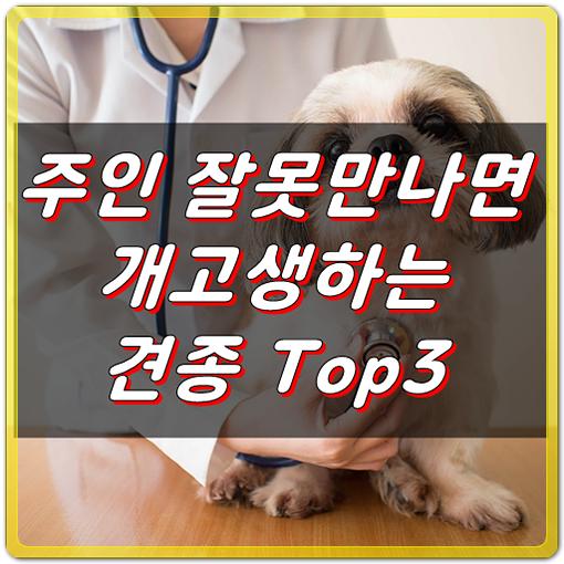 수의사도 비추천, 주인 잘못만나면 개고생하는 견종 Top3