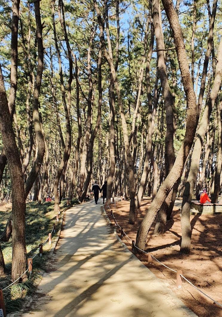 충남 서천가볼만한곳-장항송림산림욕장(장항카이워크)