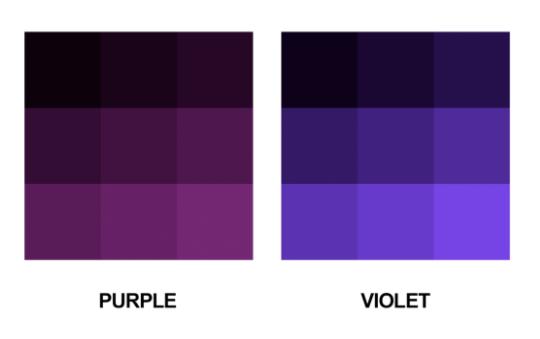 보라색, 퍼플 vs. 바이올렛? 차이가 무엇일까요? (유아영어공부)