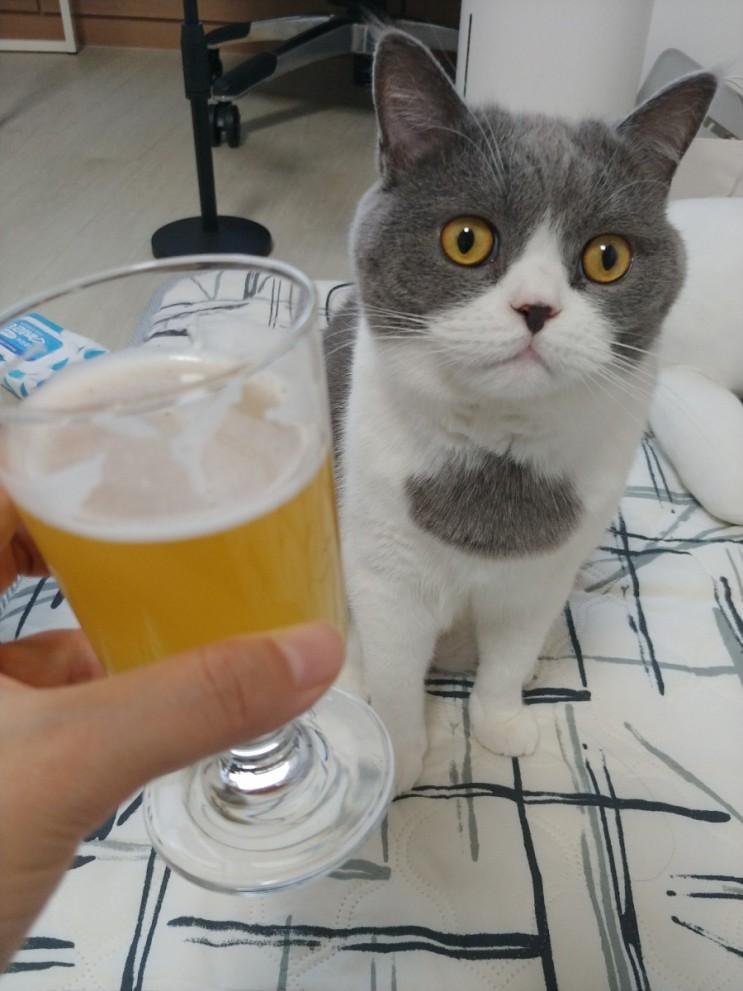 지리탕과 갓김치와 블랑캔맥과 고양이