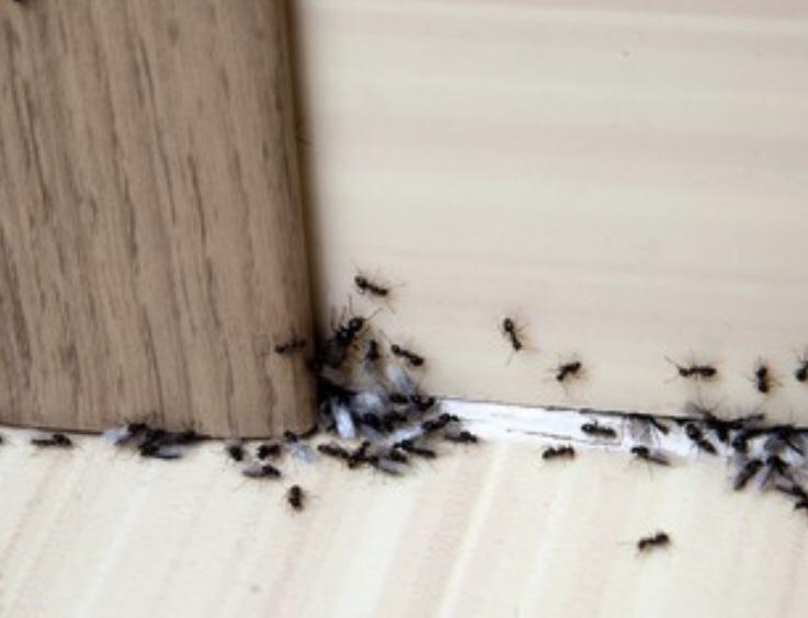 개미 물린자국 증상, 예방법!