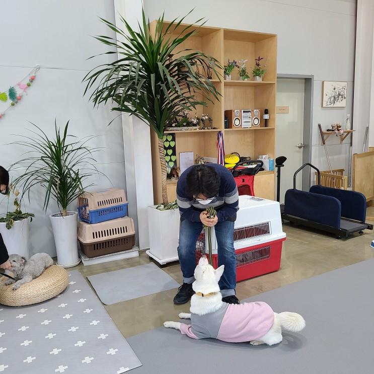 강아지 사회화훈련 스테이영애견훈련학교 2회차 후기