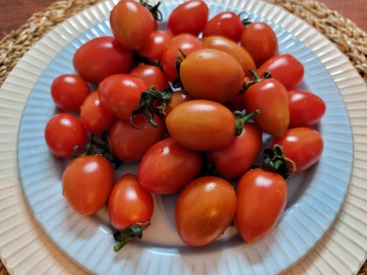 스테비아 방울토마토 부작용 & 효능 알고 건강하게 먹자구요!!