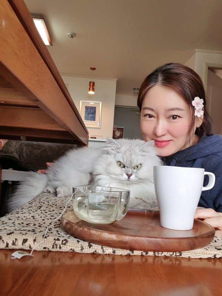나의 고양이와 티타임