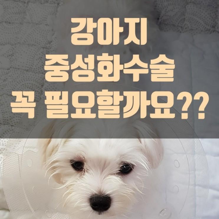강아지 중성화 수술을 꼭 해야하나요 수술비용