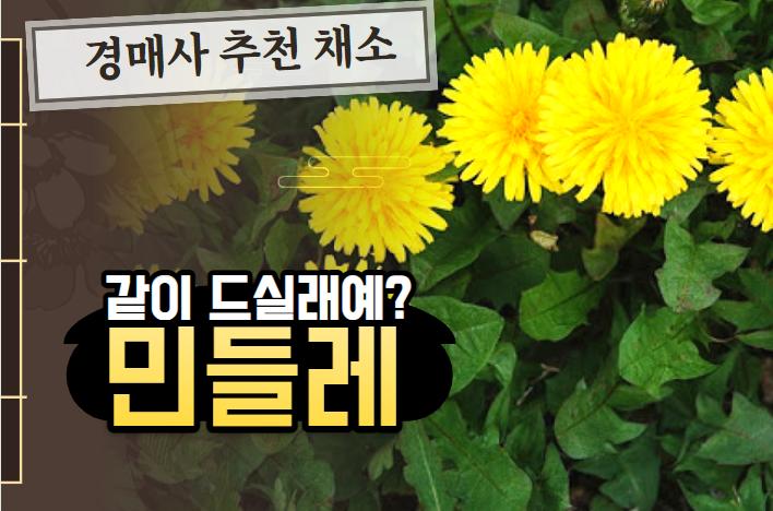 """경매사가 추천하는 제철 농산물! """"민들레"""""""